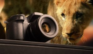 wildlife photography course